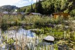 Piscine naturelle Luberon - camping Le Vallon
